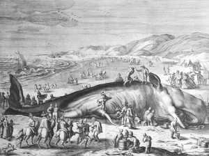 whale-pic-11