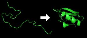 03-Protein_folding