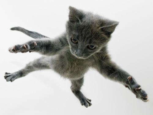 03-cat-jumping-lgn