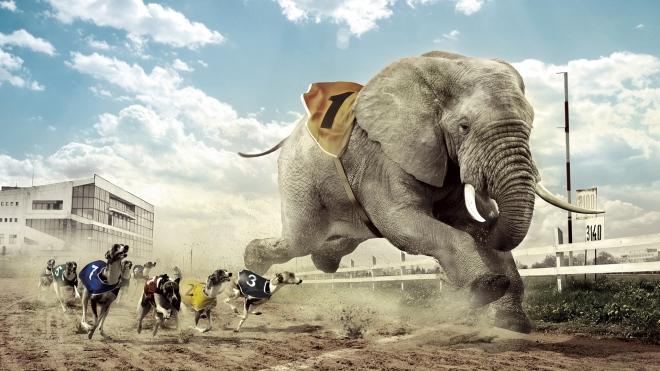 slon-vperedi