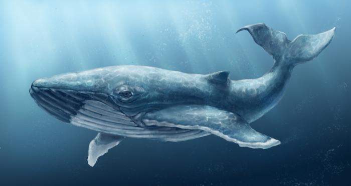 кит.jpg