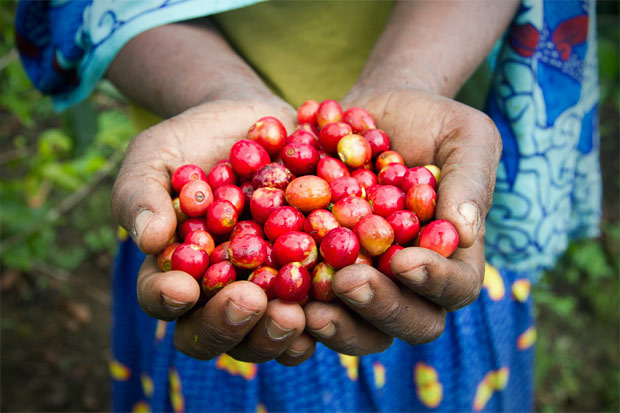 blog_technoserves-coffee-work-in-south-sudan-highlighted-in-the-globalpost.jpg