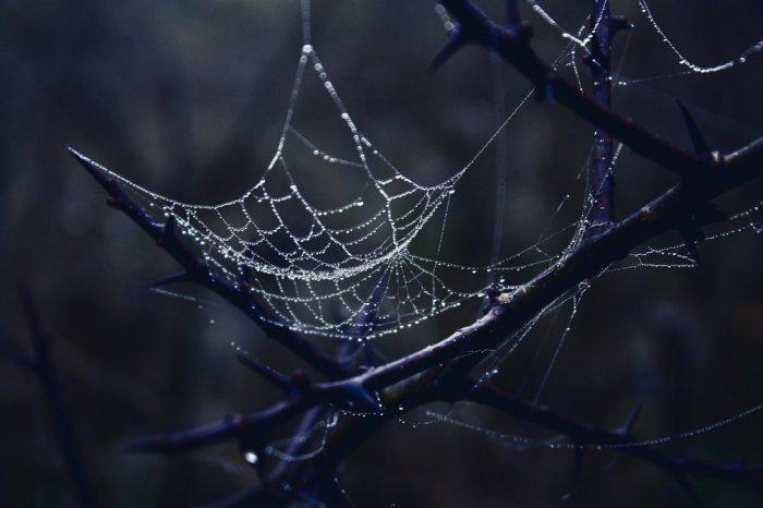 Дарквеб не сеть, а комплекс темных хранилищ